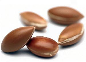 semilla-argan.jpg